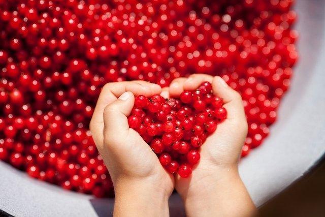 9 plantas medicinais para o coração