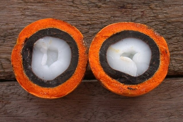 Fruta Tucumã