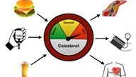 Causas do colesterol alto