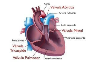 Localização das válvulas no coração