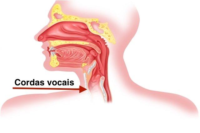 Como identificar e tratar o Calo nas cordas vocais