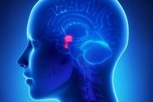 Localização da glândula pituitária no cérebro