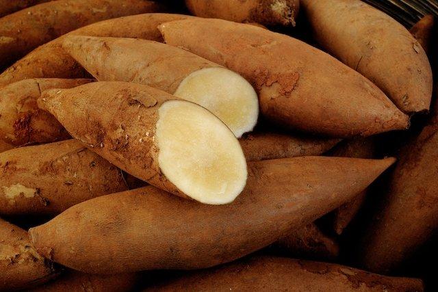 Suco de batata yacon para diabetes