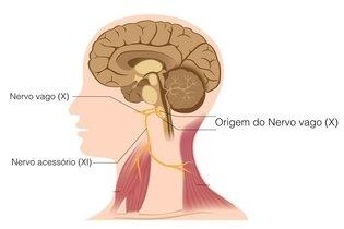 Origem do nervo vago