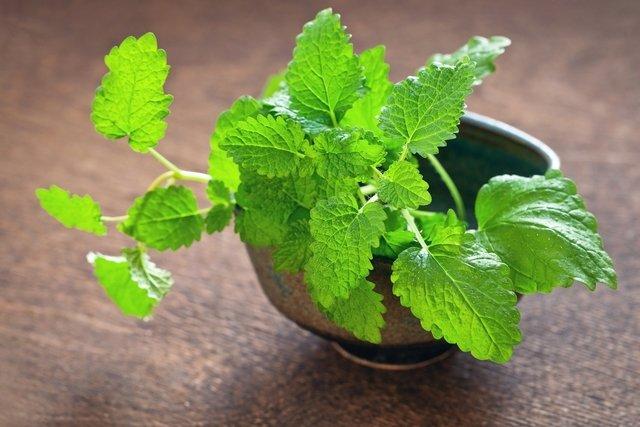 Erva-cidreira: 8 benefícios para a saúde e como fazer o chá