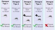 Cuáles son los diferentes tipos de dengue y dudas más comunes
