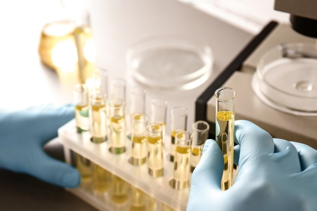 O que são uratos amorfos, quando aparece, como identificar e como tratar
