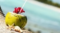 10 Great Reasons to drink Coconut Water