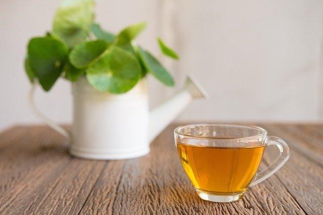 Chá de centelha asiática para celulite