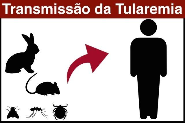 Tularemia: A doença que pode virar Arma Biológica