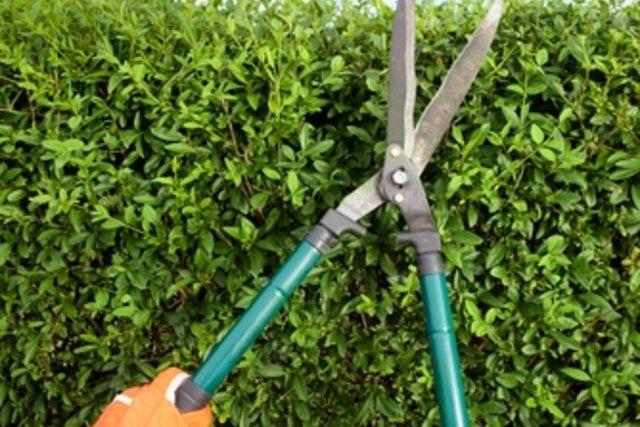 4. Jardinagem