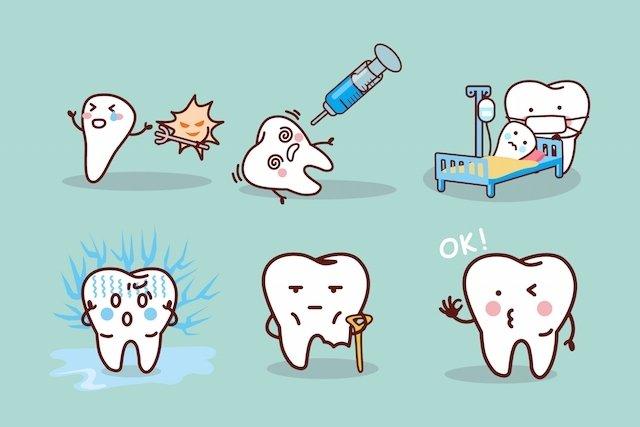 Saiba quando devem começar a cair os primeiros dentinhos