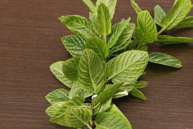 Benefícios do Chá de Hortelã