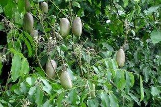 Propriétés Griffonia Simplicifolia - dépression: symptômes et traitement - Sélection du Reader's Digest