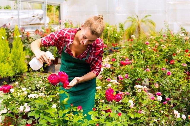 4 Inseticidas naturais para acabar com pulgões em plantas e jardins