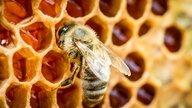 Primeiros socorros em caso de picada de abelha