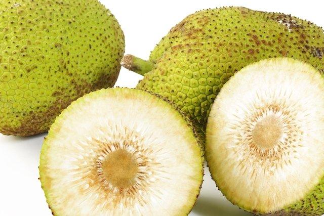 Fruta-pão é boa para Diabetes e controla a Pressão
