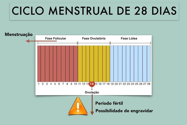 ciclo menstrual mulher como funciona