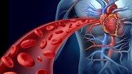 Sistema cardiovascular: Qué es, función, anatomía y enfermedades