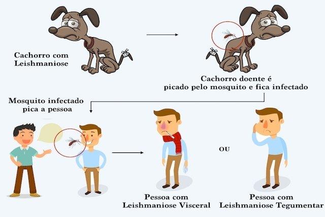 Sintomas que identificam a Leishmaniose