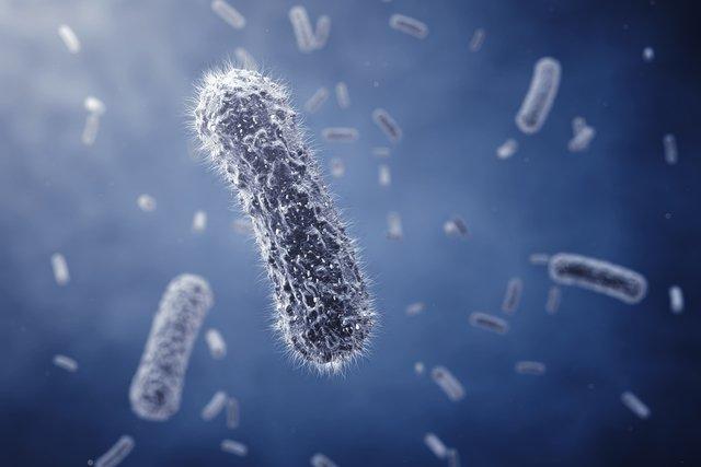 Escherichia coli: Sintomas, tratamento, transmissão