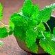 Melhores chás para combater gases intestinais