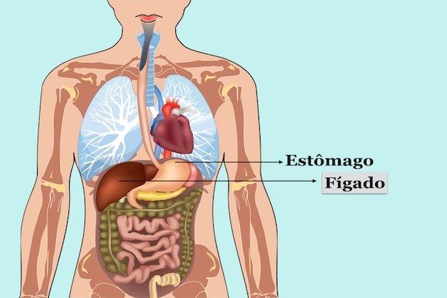Saiba quais são as Funções do Fígado
