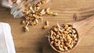 5 motivos para comer Alimentos Germinados