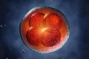 Embrião com 3 semanas