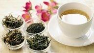 Guásima (Guazuma ulmifolia): para qué sirve y cómo preparar el té