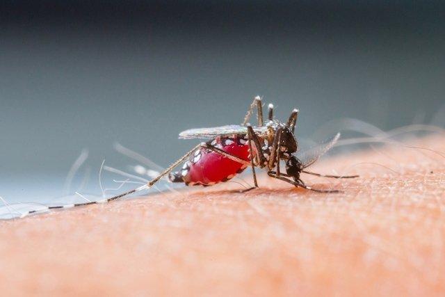 Saiba como Prevenir a Dengue de forma eficaz