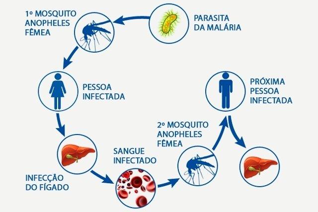 Malária: sintomas, transmissão, tratamento e como prevenir