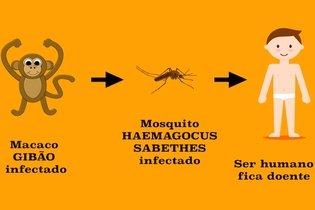 Entenda o que é Febre Amarela