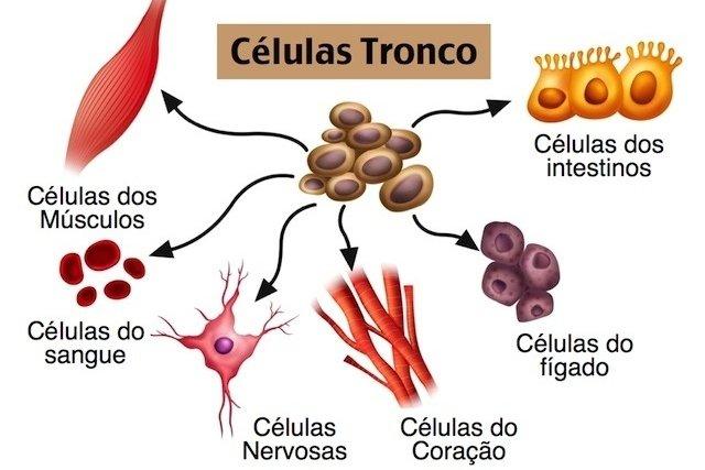 Células Tronco que se podem transformar-se em vários tipos diferentes de células