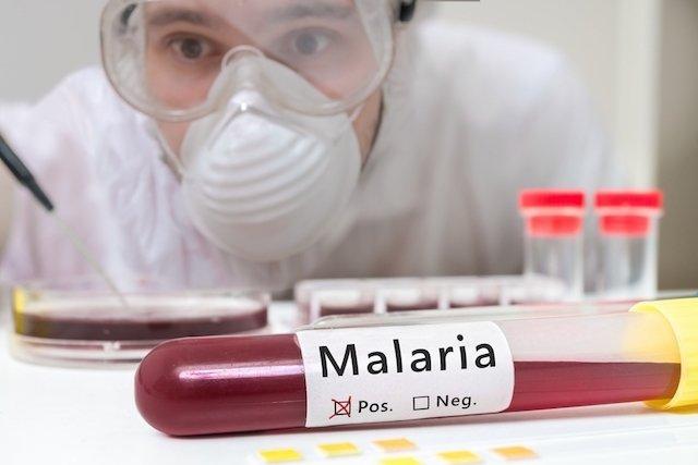 Sintomas, transmissão e tratamento da malária