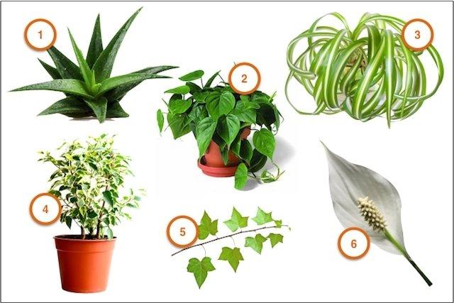 Plantas em casa fazem bem à saúde