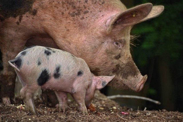 Principais doenças transmitidas por animais domésticos