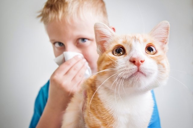 Como saber se tem alergia a animais e o que fazer
