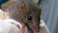 Qué hacer en caso de mordedura de rata (primeros auxilios)