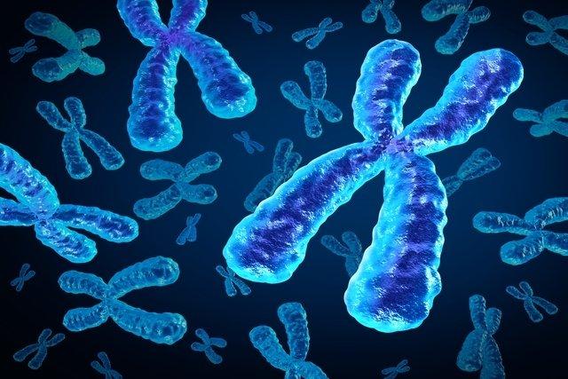 Síndrome do X Frágil: o que é, sintomas e diagnóstico