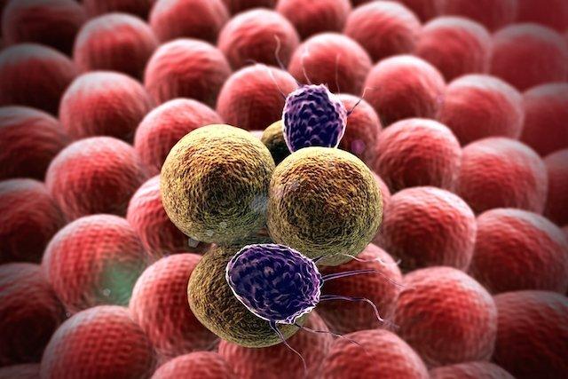 Qual a diferença entre tumor, câncer e neoplasia