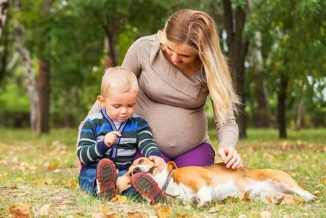 Ter cão ou gato diminui risco de alergia
