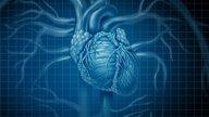 Cardiomegalia: síntomas, grados y tratamiento (Corazón grande)