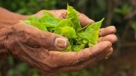 Ayahuasca: What Is It, Possible Benefits & Side Effects