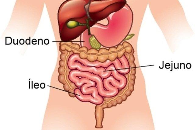 Constituição do intestino