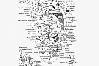 Mapa dos pontos da auriculoterapia chinesa