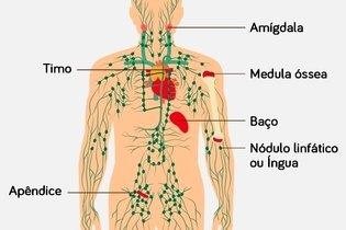 Órgãos linfáticos