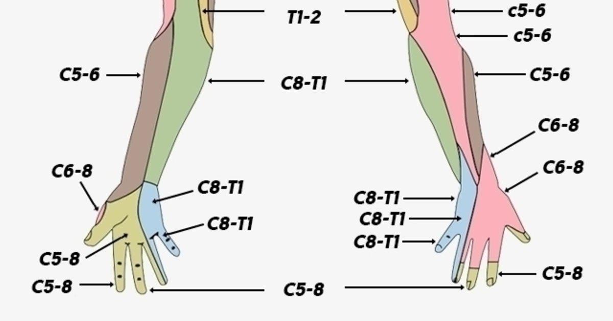 Hormigueo en brazos y piernas presión arterial alta