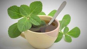 Boldo: 10 benefícios e como fazer o chá