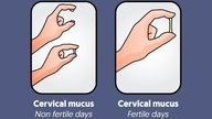 How Cervical Mucus Looks at Ovulation